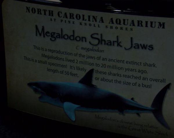 shark week 7.15.18_1531694556531.JPG.jpg