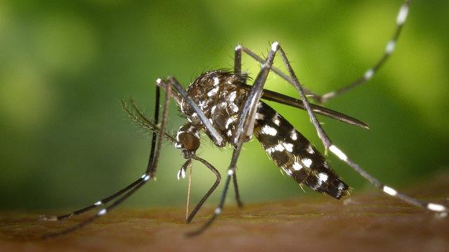 mosquito-generic_30913172_ver1.0_640_360[1]_1538044084570.jpg