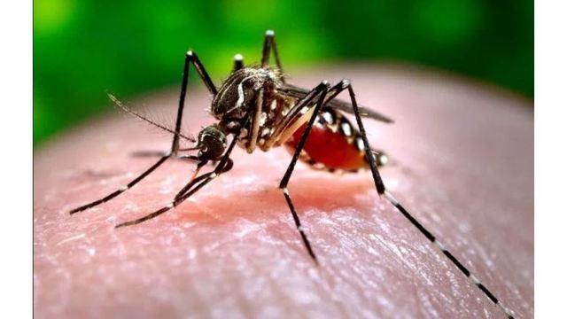 west-nile-mosquito_36169632_ver1.0_640_360_1537960573556.jpg