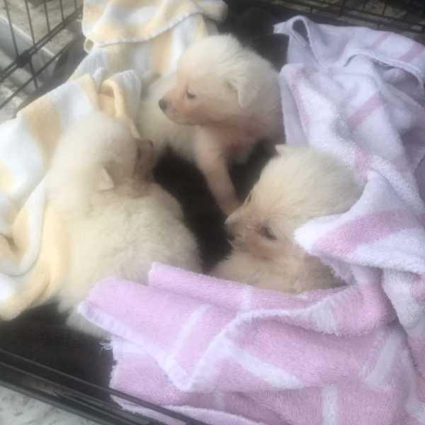 PUPPIES RESCUED_1544749545765.jpg.jpg