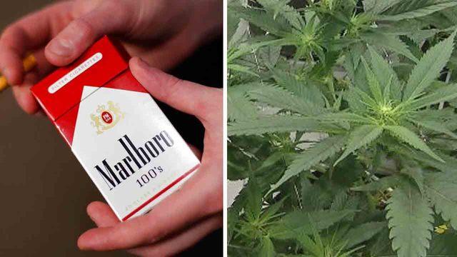 cigarettes and marijuana_1544201422247.jpg_64503638_ver1.0_640_360_1544448324201.jpg.jpg