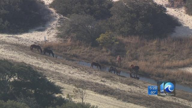 Corolla_Wild_Horse_Fund_holding_photo_co_0_78636658_ver1.0_640_360_1553265515004.jpg