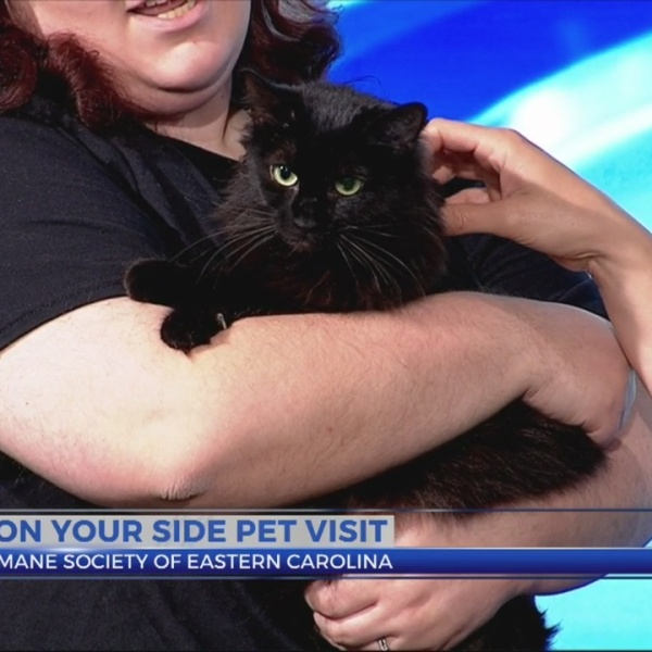9 On Your Side Pet Visit - Annie