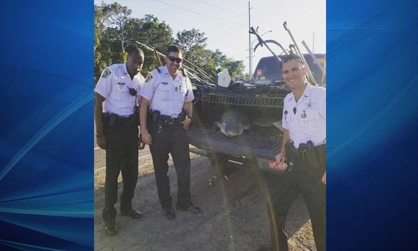 Alligator Found at Florida Walmart