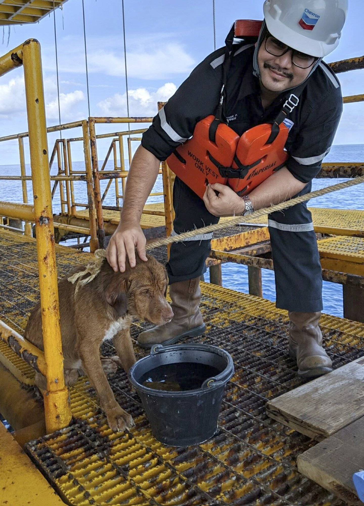 Dog Rescued In Gulf of Thailand