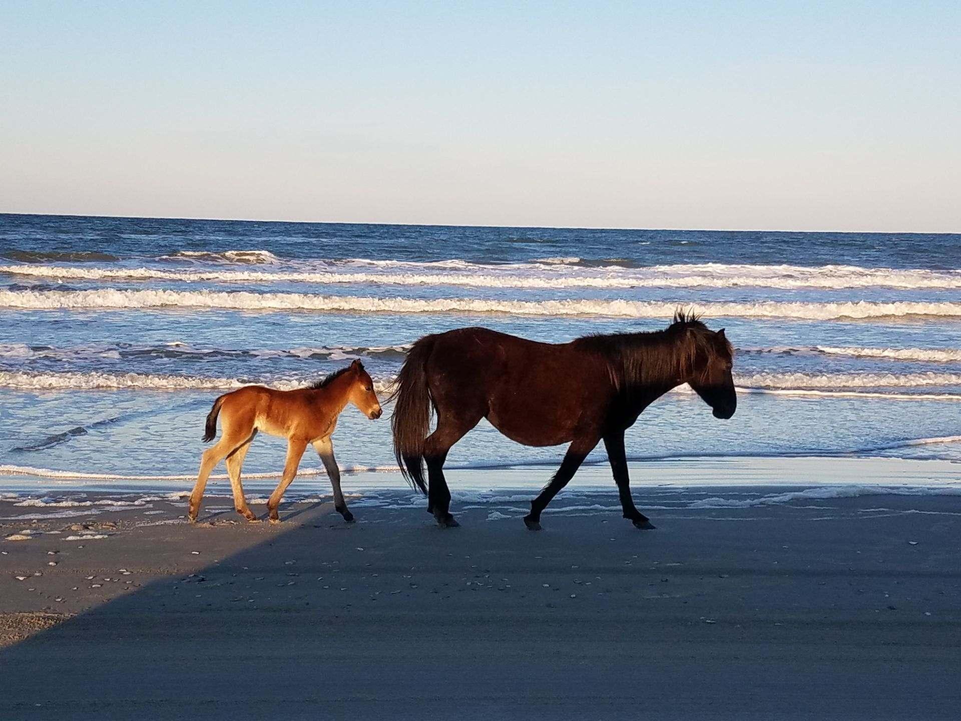 Horses photo by Mike Davenport_1554398078091.jpg.jpg