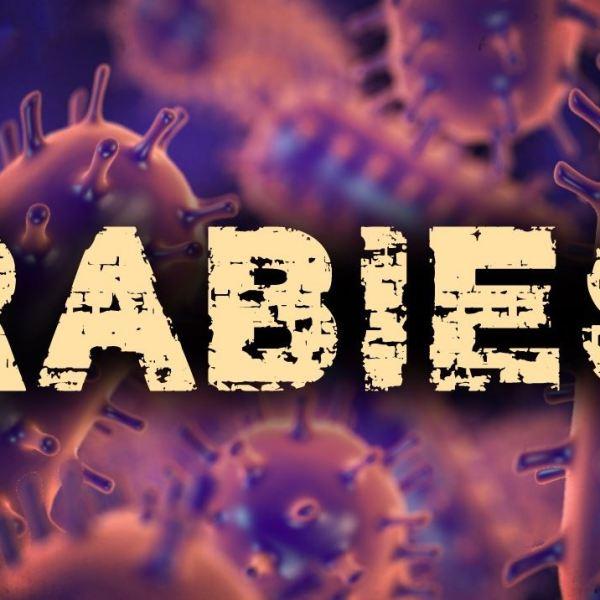 rabies_1532039799643.JPG