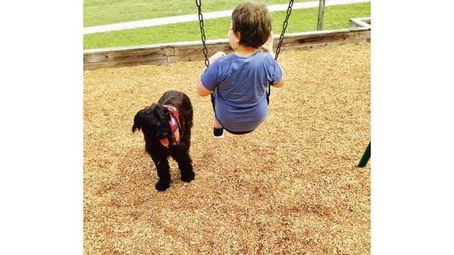 Boy with Rycon dog 2_1547114444545.jpg_67049249_ver1.0_640_360_1559175640706.jpg.jpg