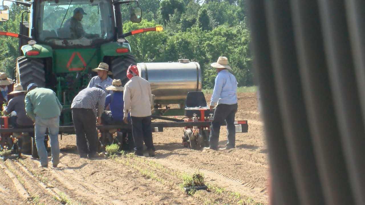 FARMERS AND TRADE WAR_1558059448341.jpg.jpg
