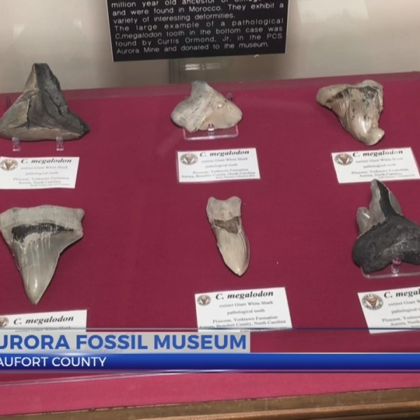 People and Places: Aurora Fossil Museum