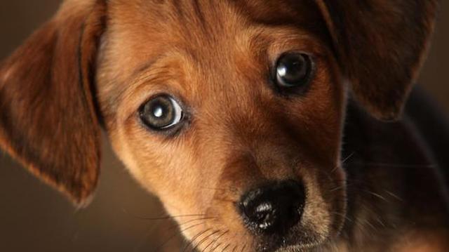dog-generic_30922829_ver1.0_640_360 (1)_1559241773752.jpg.jpg