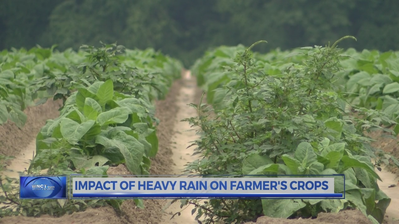 Is this rain too much for farmers in the east?