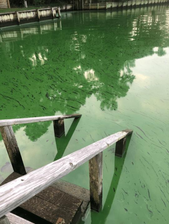 albemarle algae 2_1560280498226.PNG.jpg